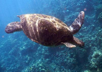 X1-713 turtle